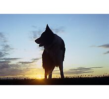 At the Sunset with Indy Photographic Print