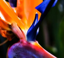 Embraced By Color by Dale Frazier