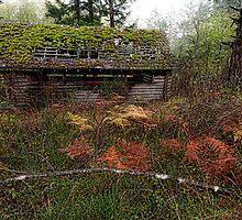 Mayne Island Abandoned Cabin - The Cabin by toby snelgrove  IPA