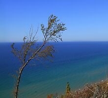 Lake Michigan Beauty by Renee Blake