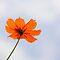 One Single Flower