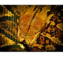 What did one snake say to another? Hiss Off! Photographic Print