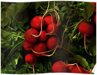 Rubies from the Field by RC deWinter