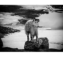 Enchantment Goat Photographic Print