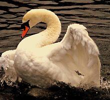 Swan Series 3. by Stan Owen