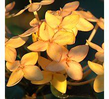 Belizean Yellow Photographic Print