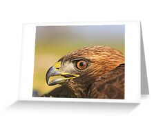 Red Tail Hawk - Family:  Accipitriformes Greeting Card