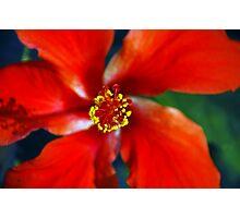 Belizean Red Photographic Print