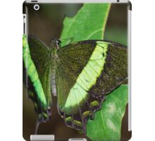 Green-banded Swallowtail Butterfly iPad Case/Skin