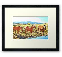 Reflection of Horses Framed Print