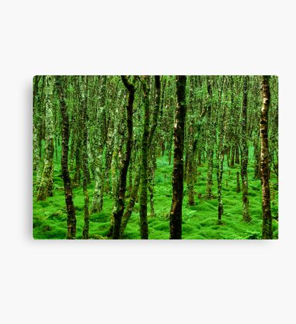 Irish Forest Canvas Print