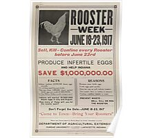 United States Department of Agriculture Poster 0316 Rooster Week Sell Kill or Confine Every Rooster Before July 23 Poster
