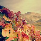 Vines with mountain on the background by João Almeida