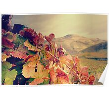Vines with mountain on the background Poster
