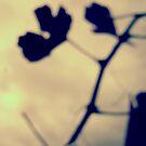 Abstract leaf and branch shadow by João Almeida