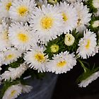 White Chrysanthemums by Skye Hohmann