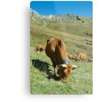 Milk Cows, Vallee des Glaciers Metal Print