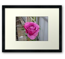 Shocking Blue Framed Print