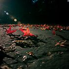 Autumn Drama by Stacey Debono