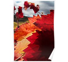 Red pointy leaves Poster