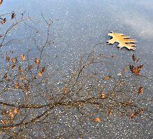 Oak Leaf in a Puddle by Kasia Nowak