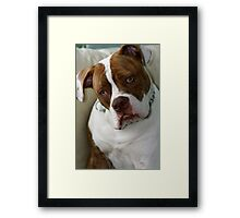 Pleeezzzz just one more! Framed Print