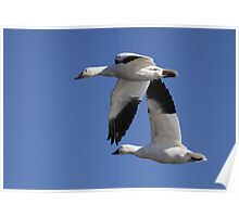 Tandem / Snow Geese Poster