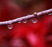 Rainy Day by Olga Zvereva