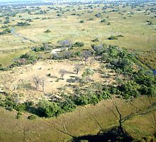 Aerial of Okavango Delta (3) by Margaret  Hyde