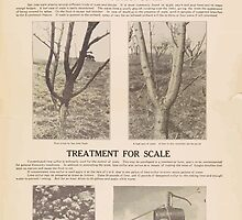 United States Department of Agriculture Poster 0075 Insured Orchard Against San Jose Scale Control by wetdryvac