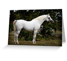 The White Horse Two Greeting Card