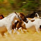 Band on the run..... by Sue Ratcliffe