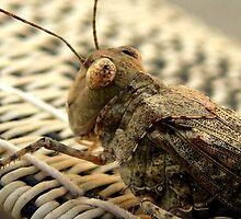 The Wise Ole Grasshopper ~ Seaside  Hopper by Carla Jensen