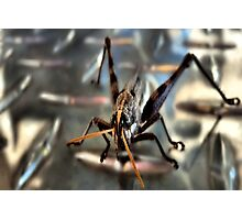 Disco Fred ~ The City Hopper Photographic Print