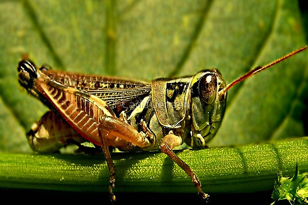 Green Grasshopper~The Country Hopper by Carla Jensen