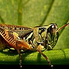 Green Grasshopper~The Country Hopper by Carla Jensen