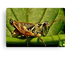 Green Grasshopper~The Country Hopper Canvas Print
