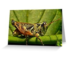 Green Grasshopper~The Country Hopper Greeting Card