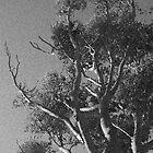 The Tree Unknown  by Jodie Bennett