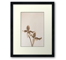 Orchid Slipper Pair in Sepia Framed Print