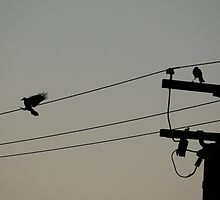 birds on a wire #1 by viviangirl