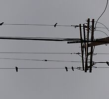 Birds on a Wire #2 by viviangirl