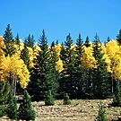 Green and yellow trees by Ann Reece