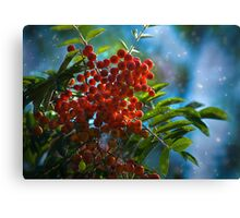 Autumn, mountain ash fine art photography Canvas Print