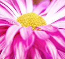Pink Fantasy by Jarede Schmetterer
