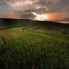 Sunrise at Ricefield by I Nengah  Januartha