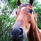 what do u mean, why the long face? by Ebony Jane