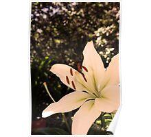 Flower 07 Poster