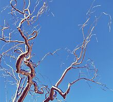 Roxy Paine's Graft. by PAPERPLAN