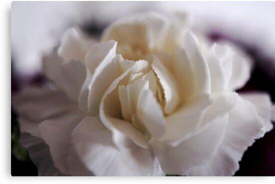 creamy dreamy carnation by Karen E Camilleri